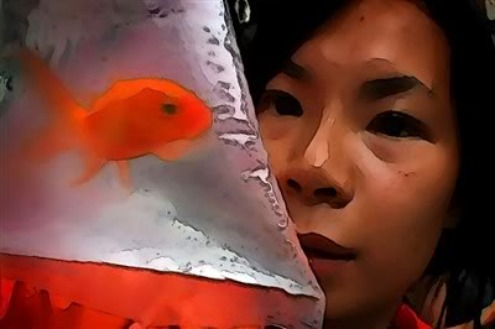 Year of the Fish inside